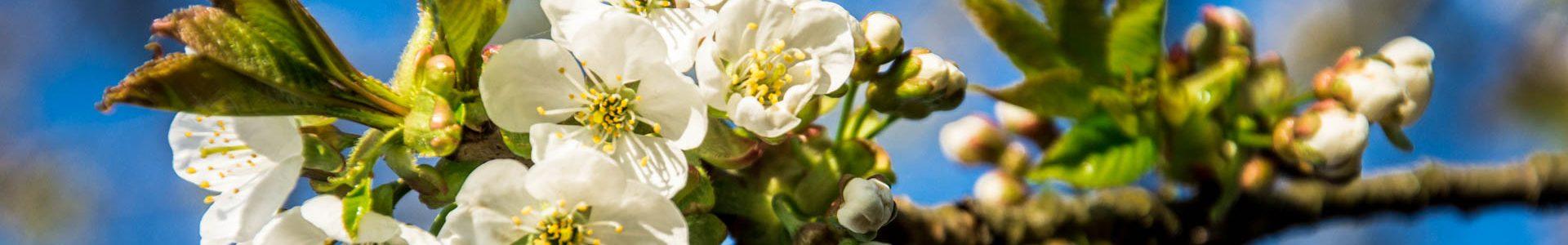 Foto: Frühling I