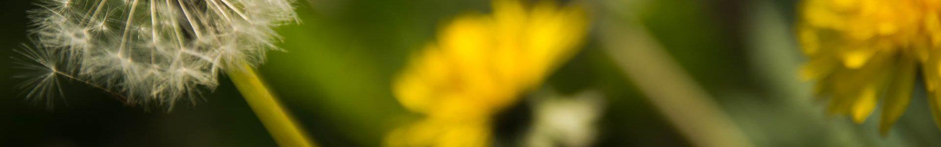 Foto: Frühling IV