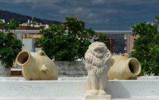 Foto: Urlaub II – Der Löwe hat alles im Blick